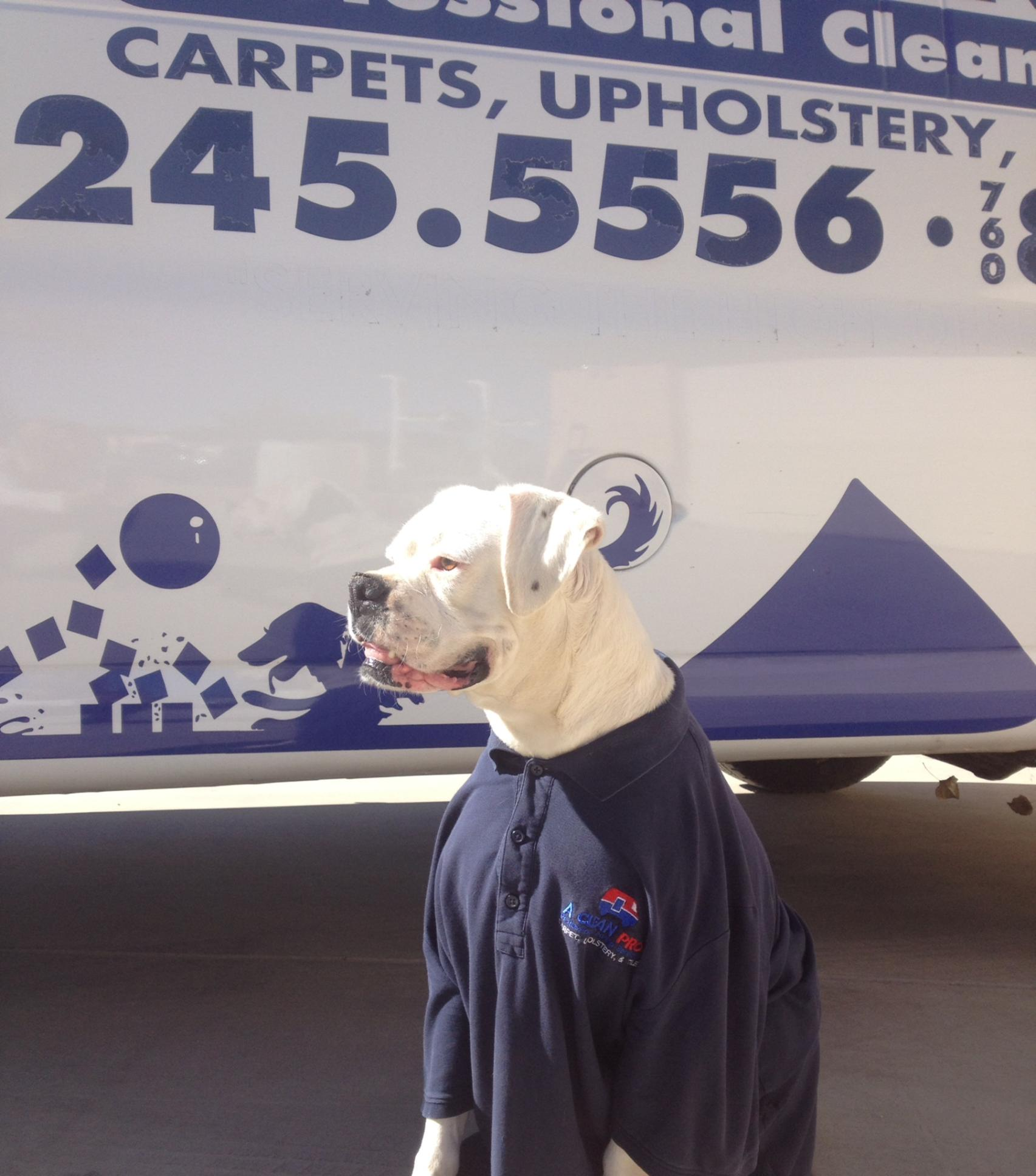 Mascot Carpet Cleaning Victorville