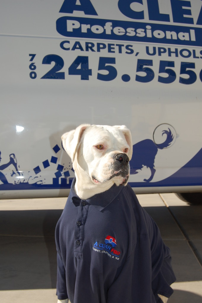 Pet smell removal Apple Valley CA