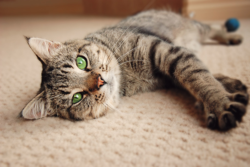 cat smell removal Apple Valley CA